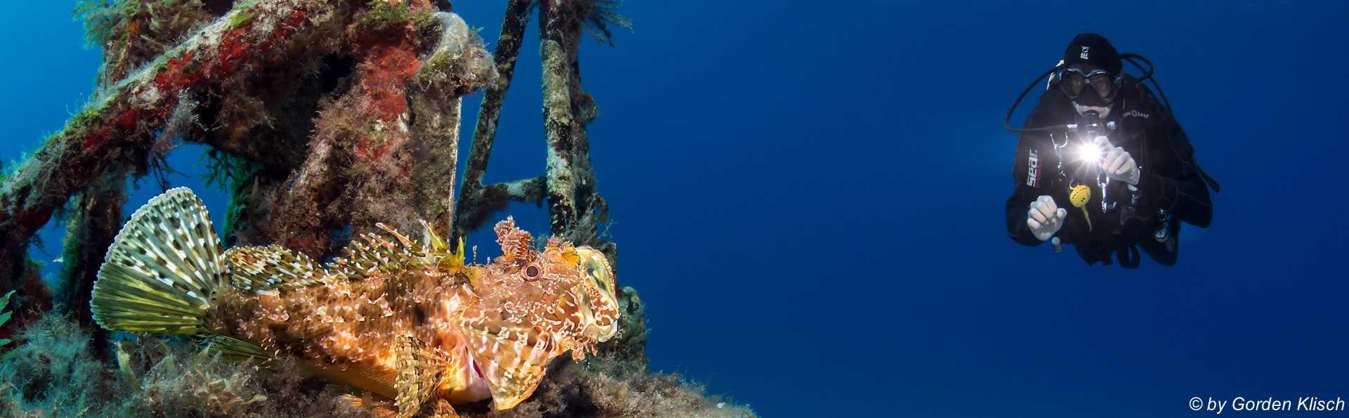 Scorpionfish Gorden Klisch Dive Vision Malta